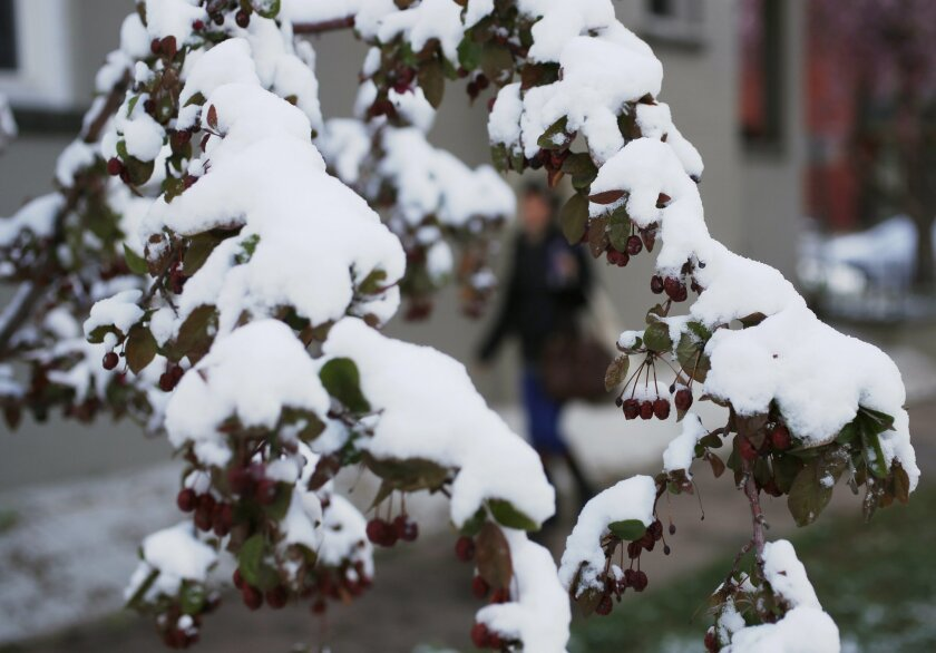 A pedestrian moves along a sidewalk while framed by branches covered with snow from a spring storm, Friday, April 3, 2015, in Denver. The dry month of March in Colorado, which is normally one of the state's snowiest months of the year, has raised concerns about water supply across the West for the summer ahead. (AP Photo/David Zalubowski)