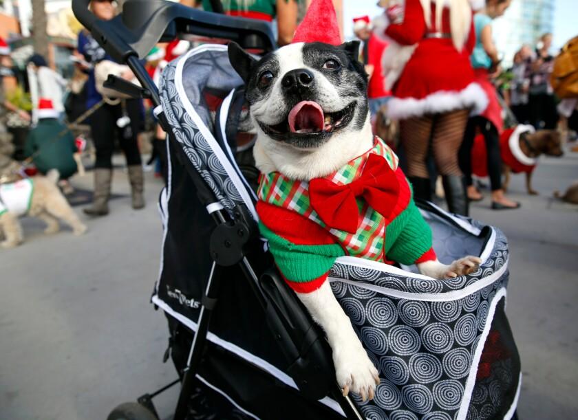 A photo of Gaslamp Holiday Pet Parade