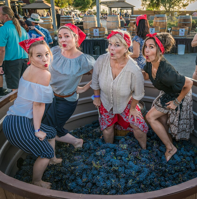 """Four grape stompers pay homage to a juicy """"I Love Lucy"""" episode."""