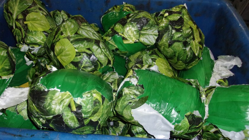 CBP officers found packages of methamphetamine, made to look like fresh spinach, Wednesday at the Otay Mesa port of entry.