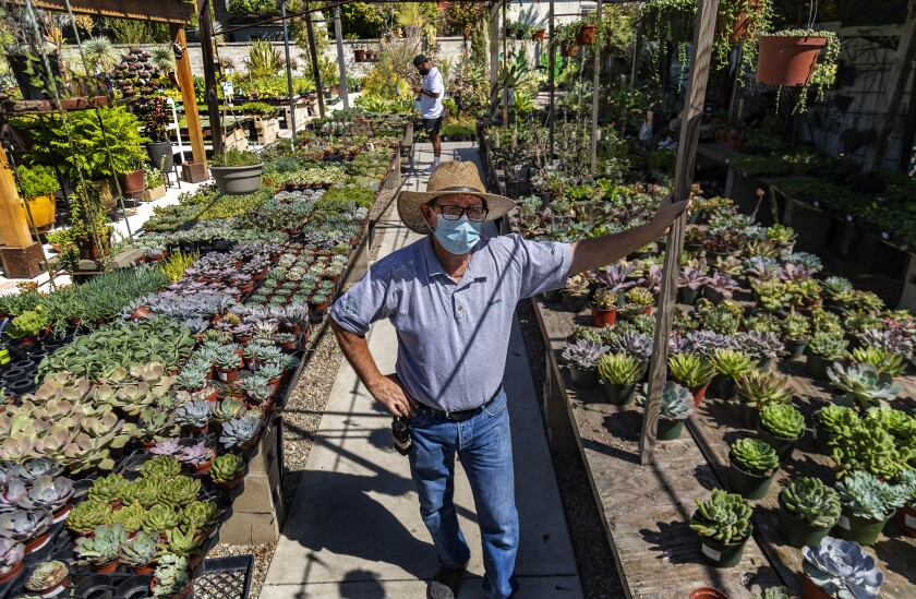 A man in denim, a straw hat and a face mask stands amid rows of succulents at a nursery.