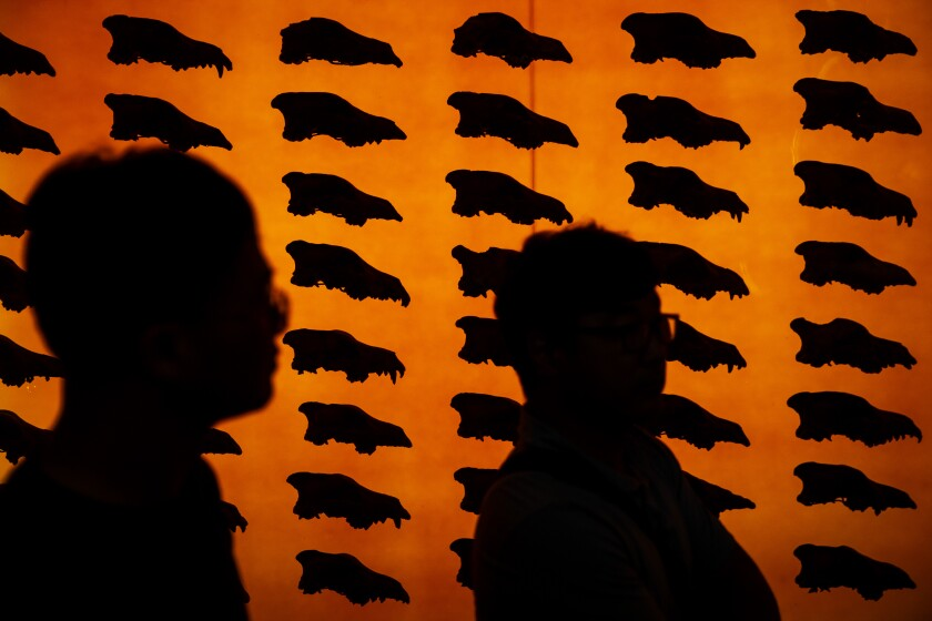 In silhouette, visitors walk past a display of dire wolf skulls at the George C. Page Museum at the La Brea Tar Pits.