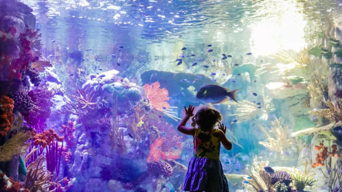 UC San Diego's Birch Aquarium will reopen on July 1 - The San ...