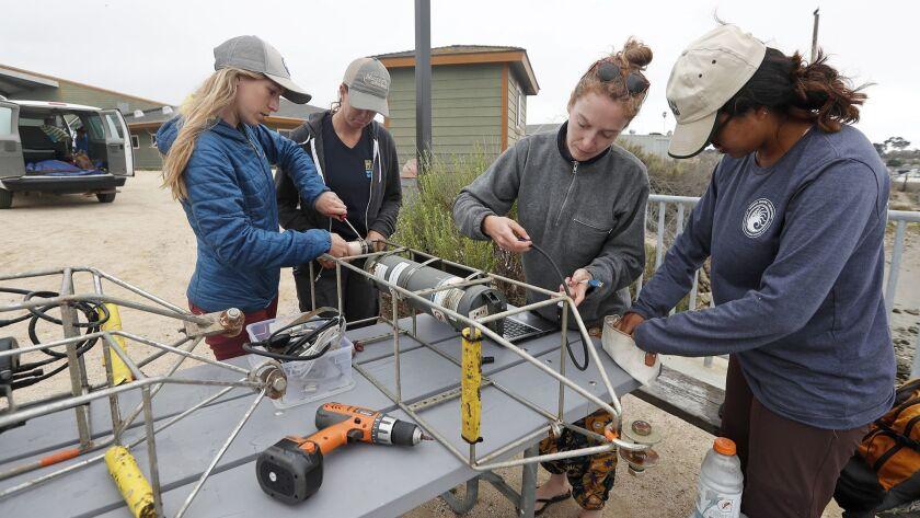 Orange County Coastkeeper Marine Restoration director Katie Nichols, second from left, and UC Davis
