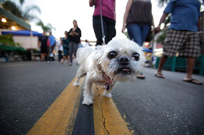 Six-year-old Jazzy strolls along Main Street with her owner in downtown Huntington Beach on Sept. 22, 2009, during Tuesday night Surf City Nights. Dogs are no longer welcome to walk along the street near the food vendors at the weekly Surf City Nights, a move that is causing howls of outrage.