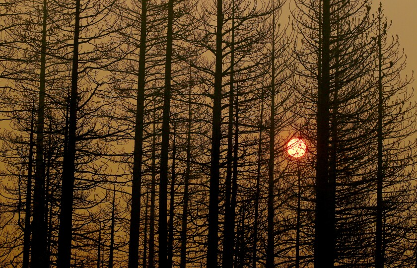 The setting sun is obscured by burned trees