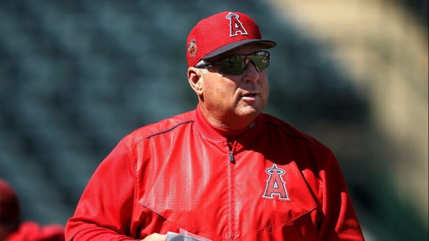 Angels Manager Mike Scioscia looks on during spring training on Feb. 24 at Tempe Diablo Stadium.