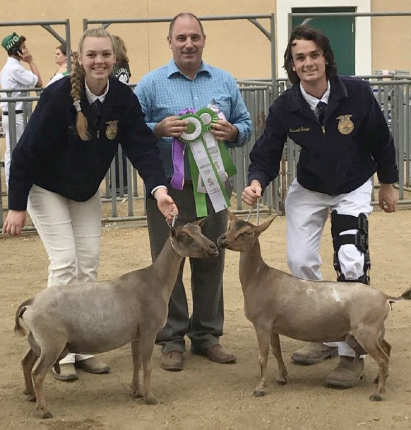 Adelaide Sorbo and her brother Russell Sorbo show off their goats at the San Diego County Fair with judge Joseph Pilots.