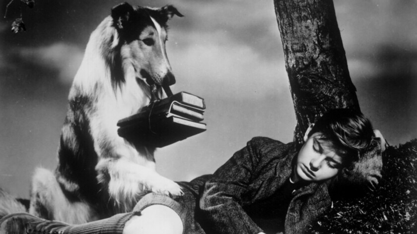 """Roddy McDowall in """"Lassie Come Home."""""""