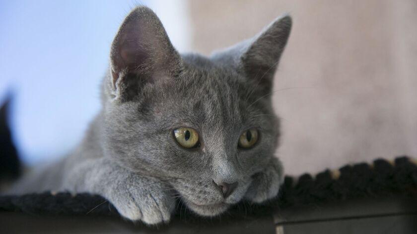 Coronado kittens