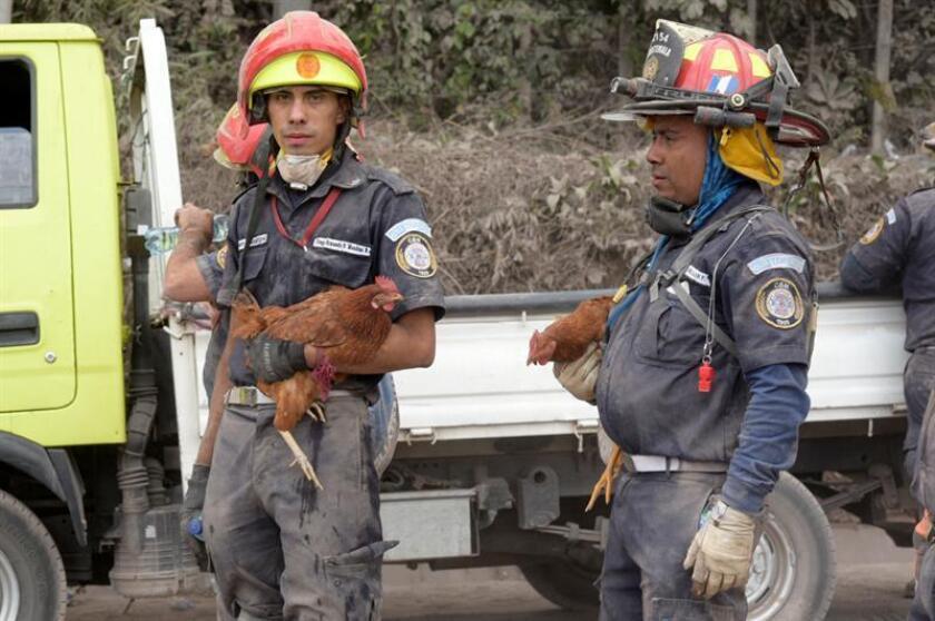 Rescatistas continúan las labores de búsqueda hoy, martes 5 de junio de 2018, en la localidad de El Rodeo (Guatemala), después de la erupción del volcán de Fuego. A 70 aumentó la cifra provisional de muertos en Guatemala por la erupción del volcán de Fuego, y las brigadas reanudaron hoy la búsqueda de desaparecidos, cuyo número es incierto, bajo las toneladas de ceniza, informó una fuente oficial. EFE
