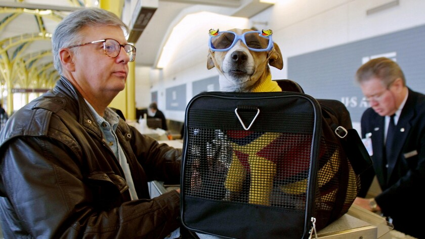 F Andy Messing Jr Checks In At An Airline Counter With His Pet Dick The Dog For A Fli