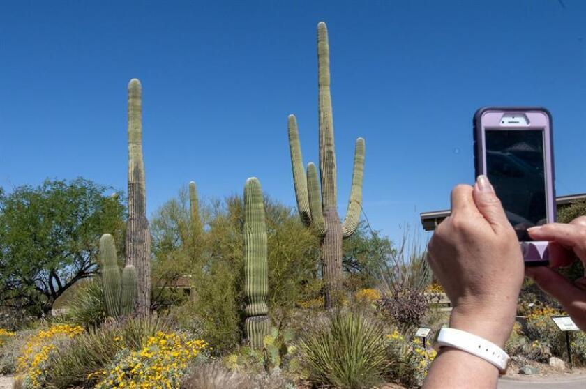 Turistas toman fotografías en el Parque Nacional Saguaro este lunes, 23 de abril de 2018, en el suroeste de Arizona (EE.UU.). EFE