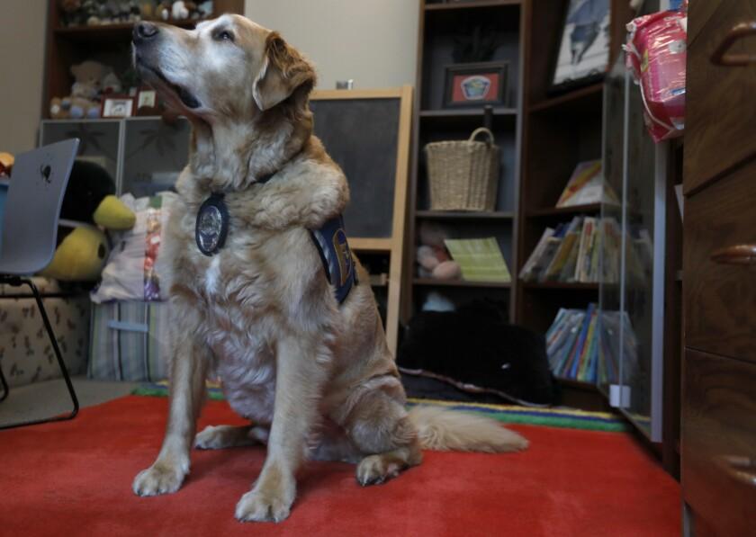 Police dog Scottie
