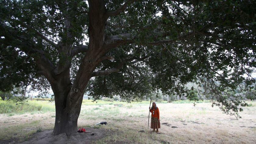 """Spiritual leader Adelia Sandoval stands under the canopy of the """"mother oak,"""" central to the Juaneno"""
