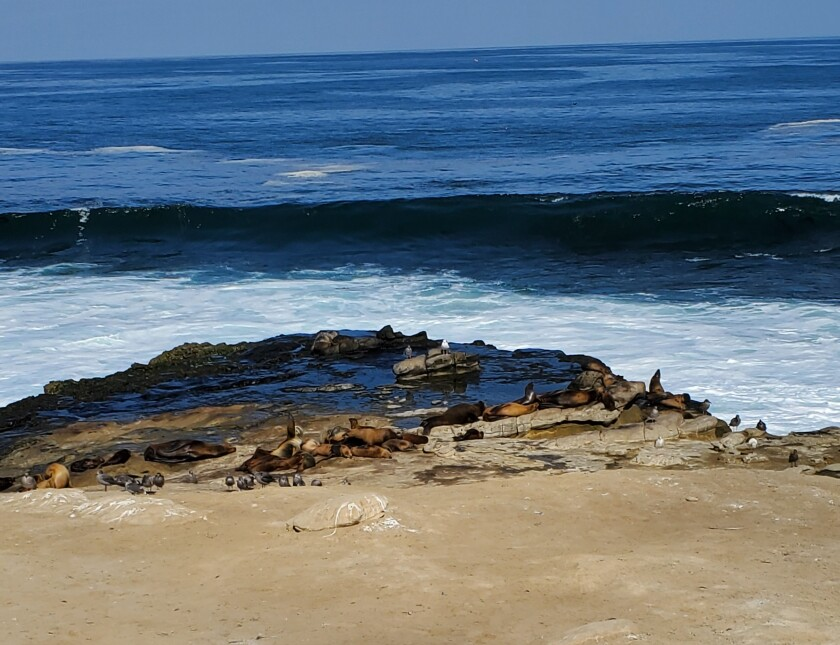 Sea lions rest at Point La Jolla in September.