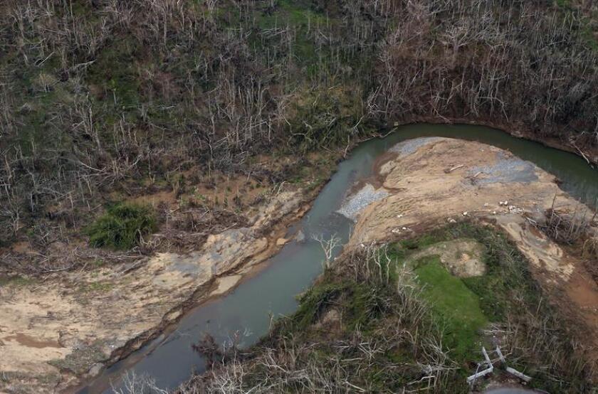 Fotografía del 30 de septiembre de 2017, donde se observan unos árboles devastados en el municipio de Utuado en Puerto Rico, según resultados preliminares del Instituto Internacional de Dasonomía Tropical del Servicio Forestal Federal, dijo a Efe su director, Ariel Lugo. EFE