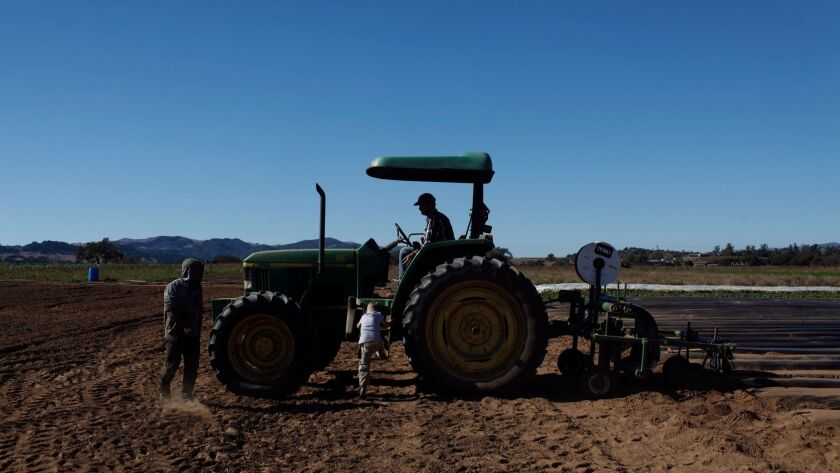 A child climbs up the tractor to his father in Santa Ynez, Calif. on November 12, 2012.