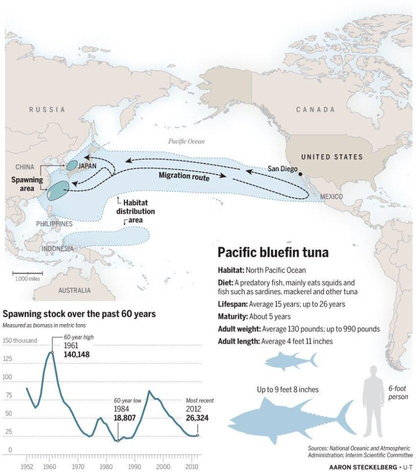 Bluefin_tuna_stock_091114.ai
