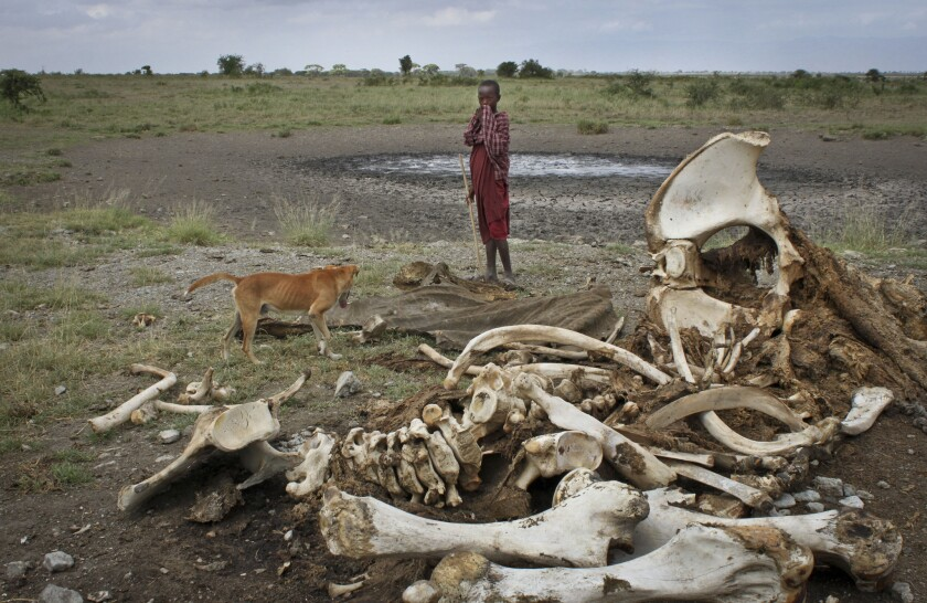 A Masai boy and his dog near the skeleton of an elephant killed by poachers in Arusha, Tanzania.