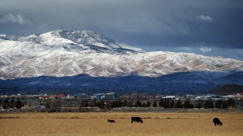 FILE--This Dec. 25, 2014, file photo shows cattle grazing with a view of the fresh snow on Peavine Peak on Christmas morning in Reno, Nev. Nevada Gov. Brian Sandoval is urging the Bureau of Land Management to reconsider livestock grazing restrictions in northeast Nevada that he says may be unwarranted given a wet winter that has drought conditions on the mend. (Jason Bean/Reno Gazette Journal via AP, file) NO SALES; NEVADA APPEAL OUT; SOUTH RENO WEEKLY OUT; MANDATORY CREDIT
