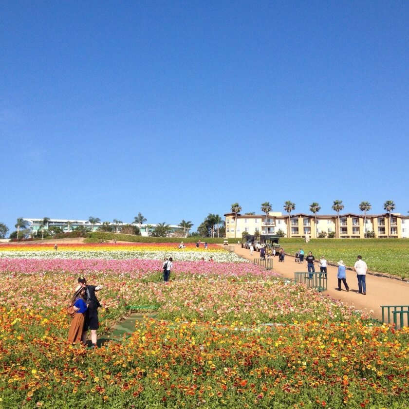 The Flower Fields are open through May 10. L. McIntosh