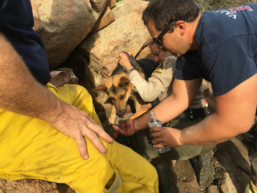 A firefighter offers water to a dog the crew had just rescued