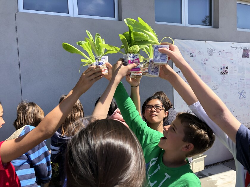 Students at De Portola Middle School celebrate their success growing romaine lettuce.