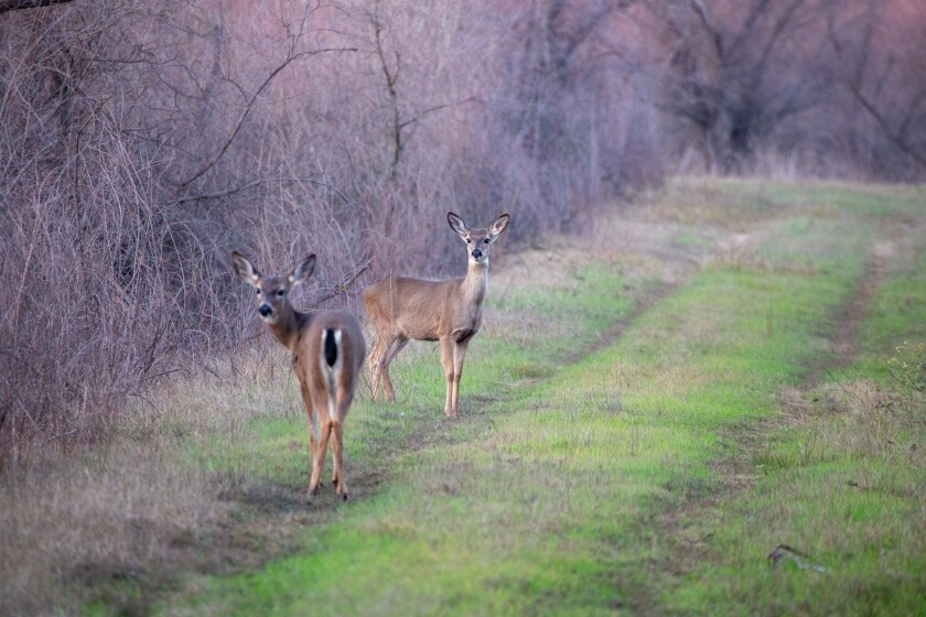 DNA analysis of deer meat samples proved a Yuba County man illegally killed more deer than he initially admitted to.