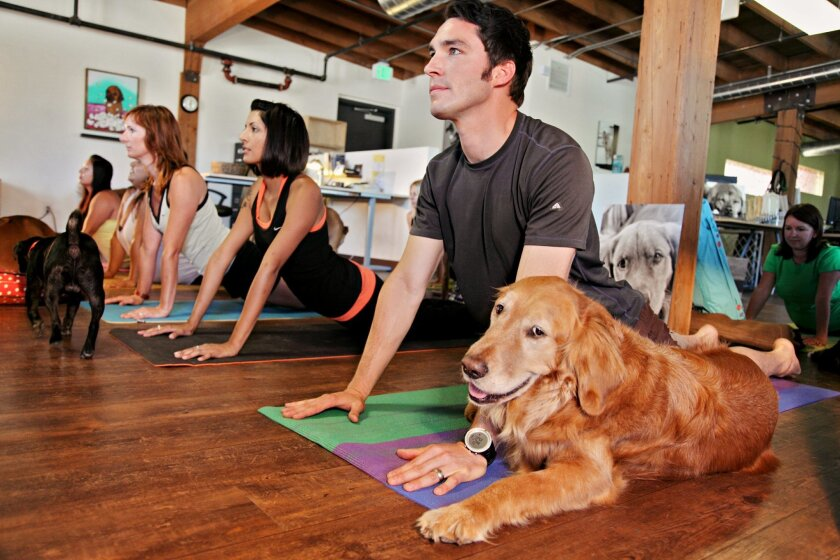 A daytime yoga session held at The Honest Kitchen's office in the East Village. Company CFO Michael Greenwell is flanked by Sully, his Golden Retriever.