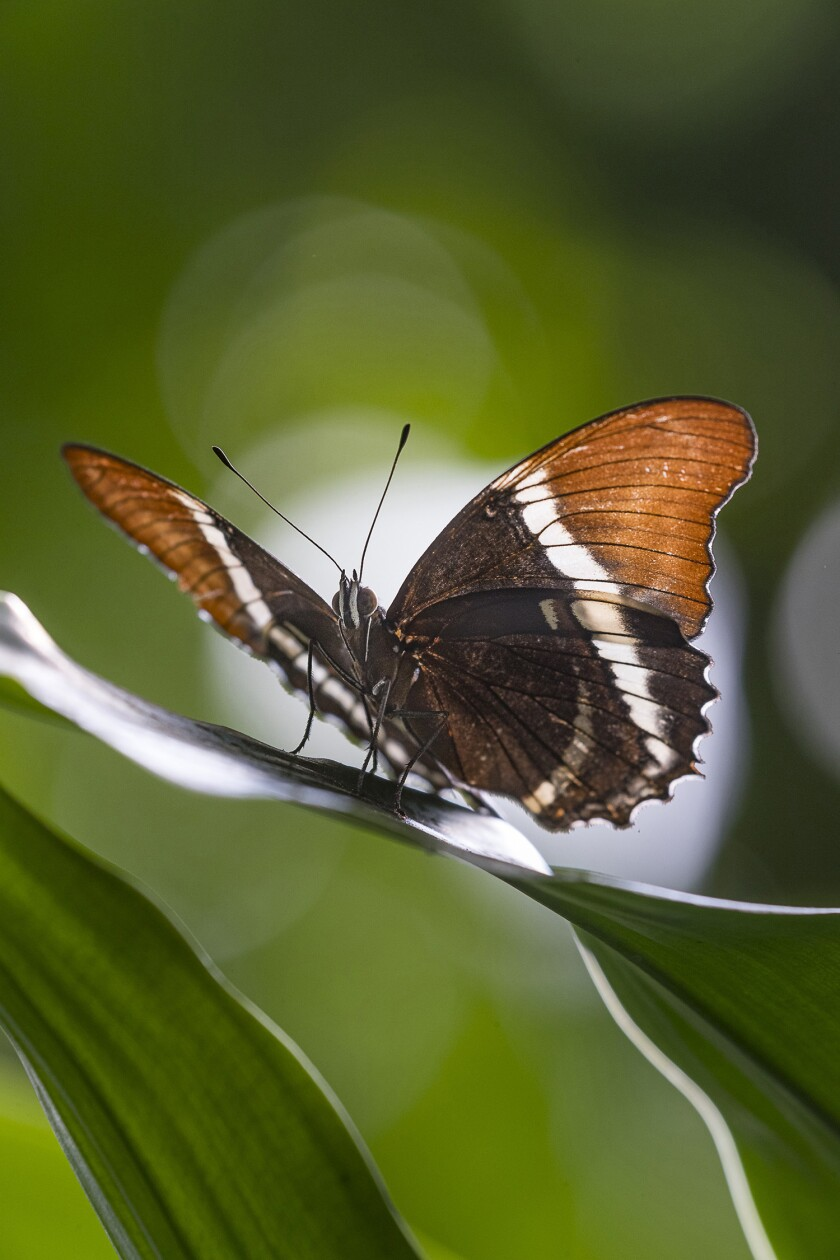San Diego Zoo Safari Park Launches New Butterfly Cam to Bring these Amazing Insects to Online Visitors