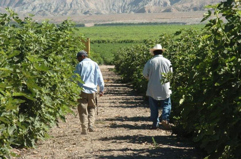 Una compañía agrícola de Colorado fue multada por dar preferencia a trabajadores extranjeros ante ciudadanos estadounidenses, infringiendo así leyes inmigratorias vigentes, según información difundida por el Departamento de Justicia.