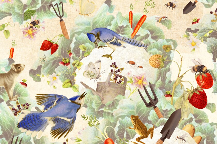 Fall gardening illustration