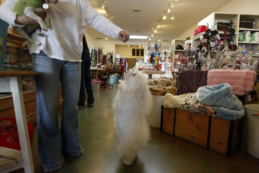 Petco said it would stop selling dog and cat treats made in China. Above, a dog gets a treat at a Los Angeles pet store in 2010.