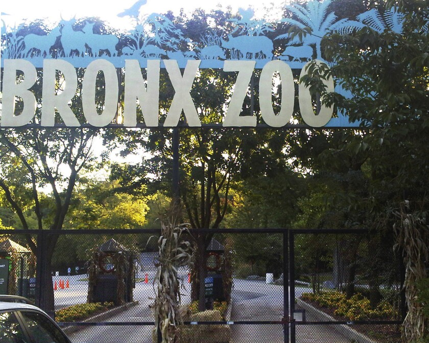 Bronx Zoo in New York, where a tiger has tested positive for the coronavirus