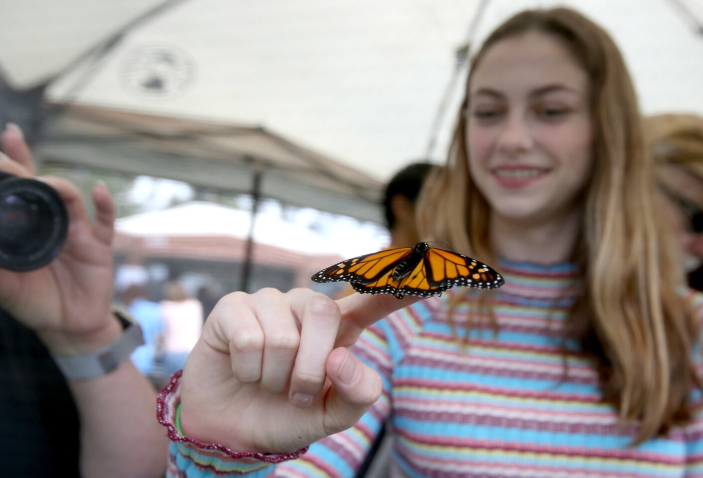 Photo Gallery: Annual Monarch butterfly day in Fountain Valley