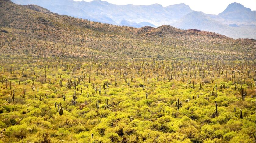 Organ Pipe Cactus National Monument, Ariz.