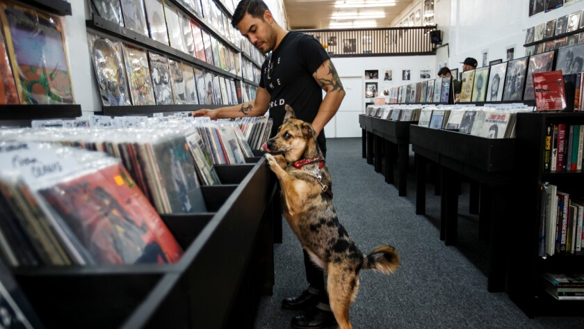 Tim Gonzalez and Nola the puppy shops at the new Pop Obscure Records store in downtown Los Angeles.