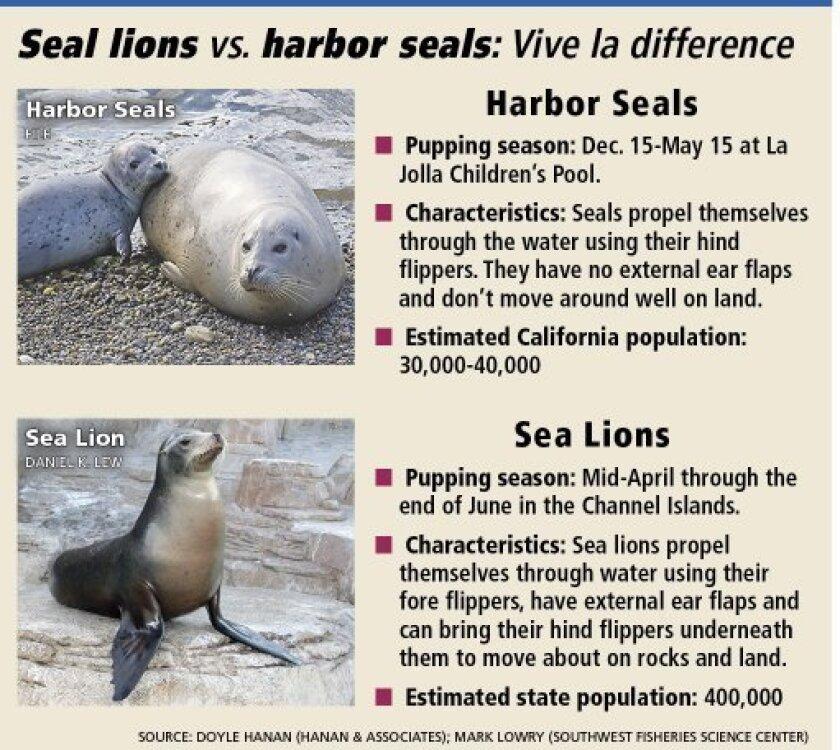 Sea_Lions_Seals_1