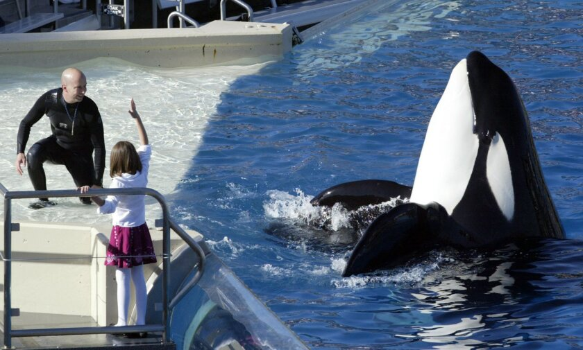 FILE - In this Nov. 26, 2006, file photo, SeaWorld Adventure Park trainer Ken Peters, left, looks to a killer whale during a performance at Shamu Stadium inside the theme park in San Diego. SeaWorld — whose safety practices have been under scrutiny since an animal trainer was killed in 2010 by an o