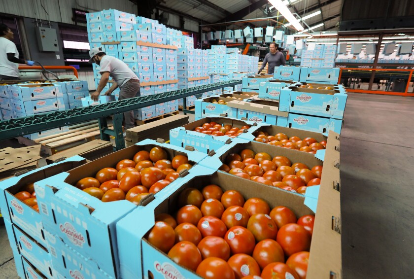 Cases of vine ripened tomatoes are ready for shipment in the warehouse/packing facility at West Coast Tomato Growers.