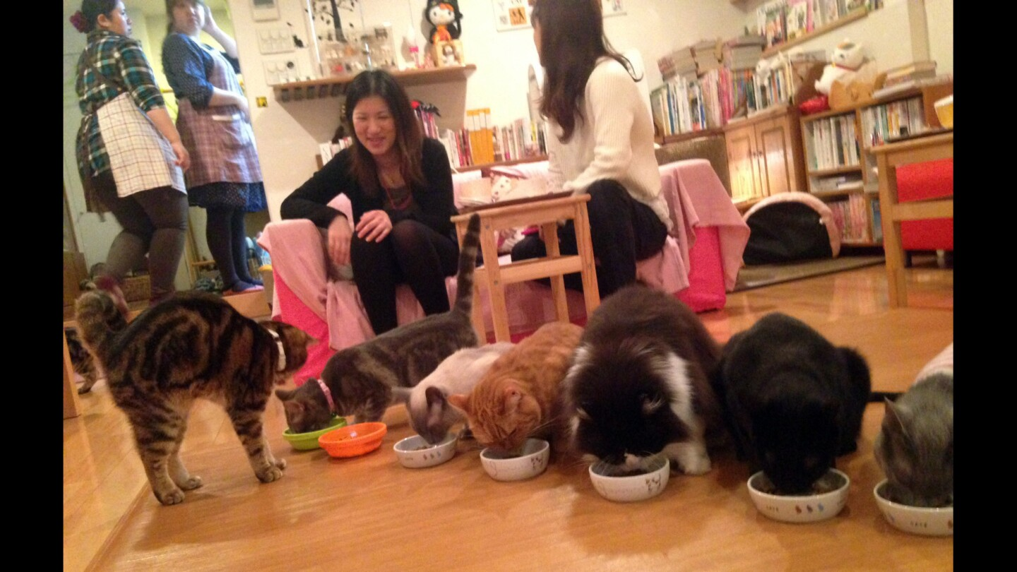The Hapineko (Happy Cat) cafe in Tokyo's Shibuya district is so well maintained that one may be inclined to think, for a moment, that harboring more than a dozen felines in about 500 square feet is a reasonable proposition.