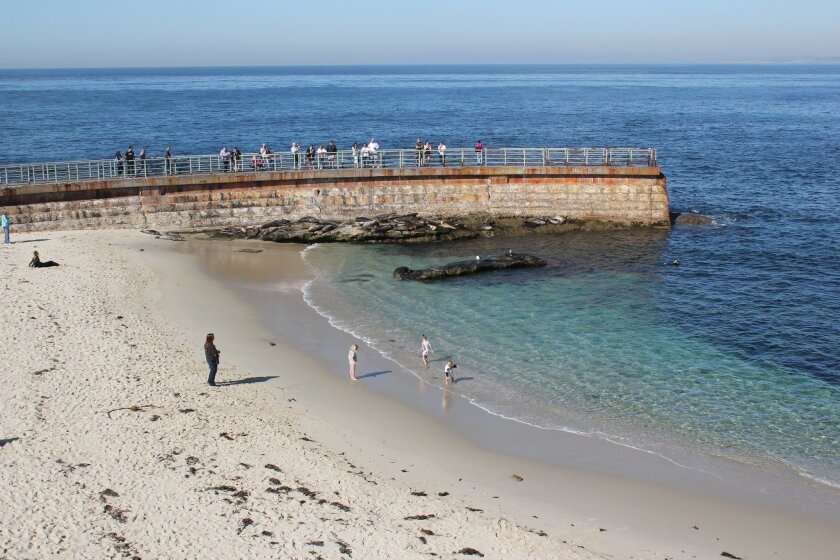 Children's Pool beach, just prior to establishment of a year-round guideline rope intended to keep humans a safe distance from seals. A City Council vote to close the beach during the seals pupping season was postponed Oct. 29. File