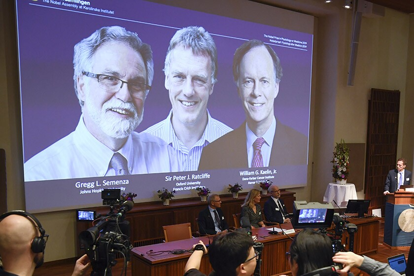 Nobel winners Gregg L. Semenza, on screen at left, Peter J. Ratcliffe and William G. Kaelin Jr.