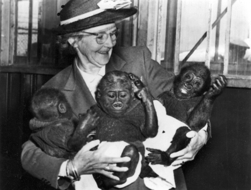 The San Diego Zoo, founded in the waning days of the Panama- California Exposition in 1916, named Belle Benchley as director in 1927, a post she held until her retirement in 1953. A rare assignment for a woman in those days, the job in the zoo's formative years involved building the collection,