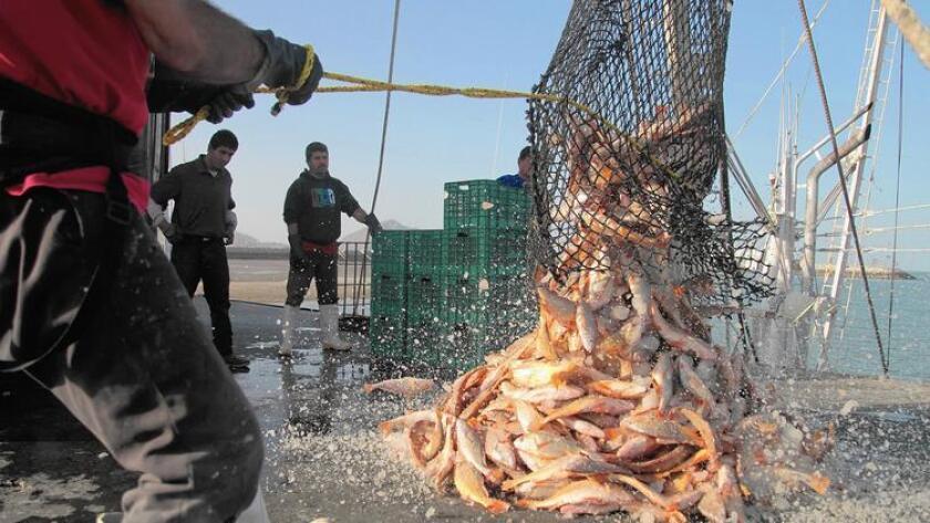 Pescado congelado es soltado de una red de pescar en un muelle de San Felipe, en Baja California. Investigadores han registrado un descenso sostenido y significativo de una gran variedad de contaminantes en peces.