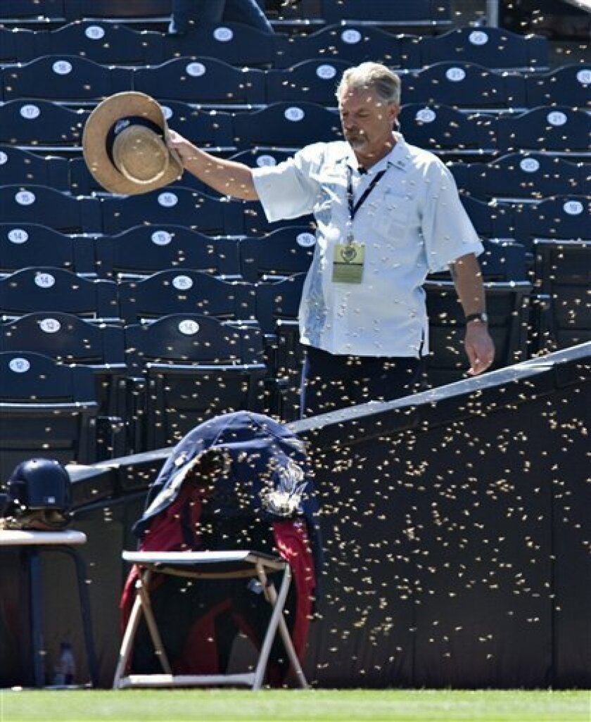 An unidentified usher tries to move a swarm of bees as they cover a chair in left field during the ninth inning of a baseball game between the San Diego Padres and the Houston Astros, Thursday, July 2, 2009, in San Diego. The swarm delayed the game. (AP Photo/Denis Poroy)