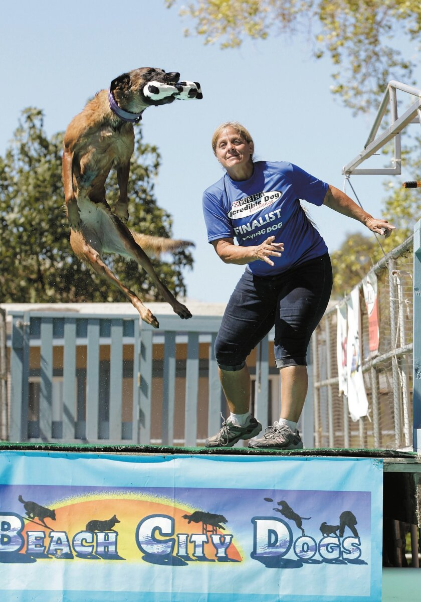 Lise Ann Strum throws a toy to her Belgian Malinois, Vhoebe, who is a champion dock-diving dog.