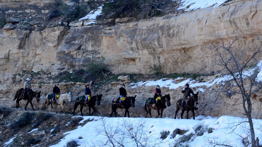 A mule string heads down the Bright Angel Trail from the south rim of the Grand Canyon.