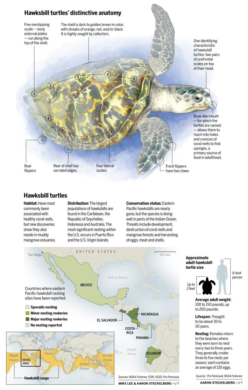 Turtle-graphic-A1-NEW